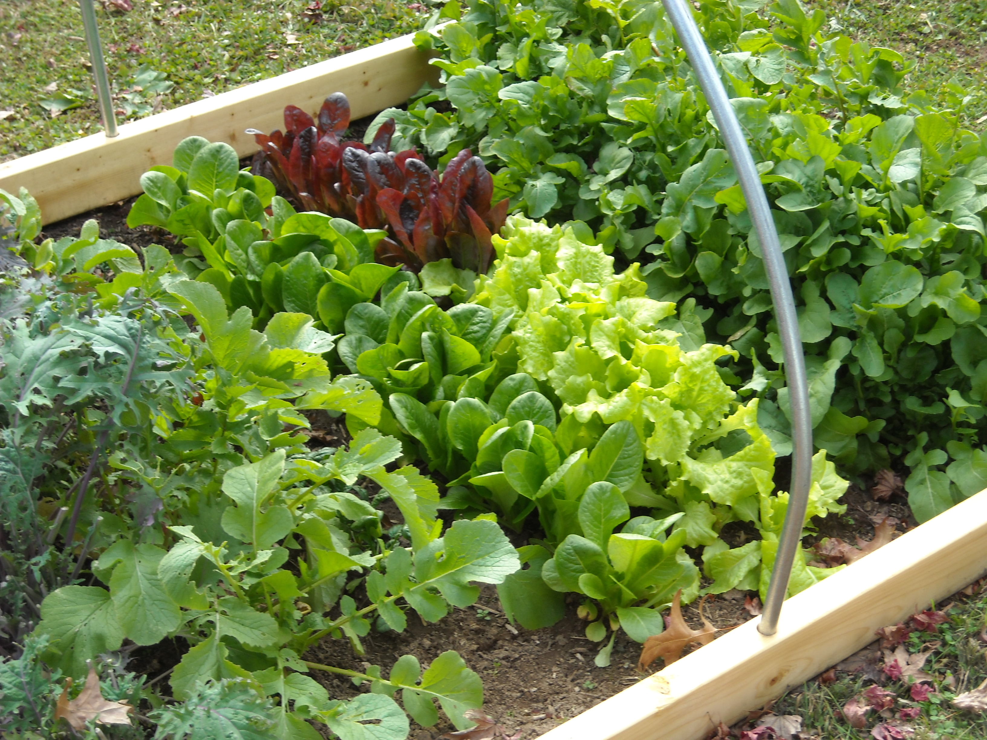 How to start an organic garden?