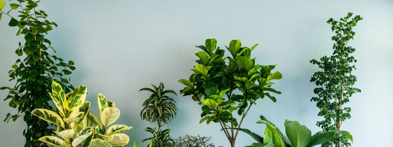 How to water indoor plants?