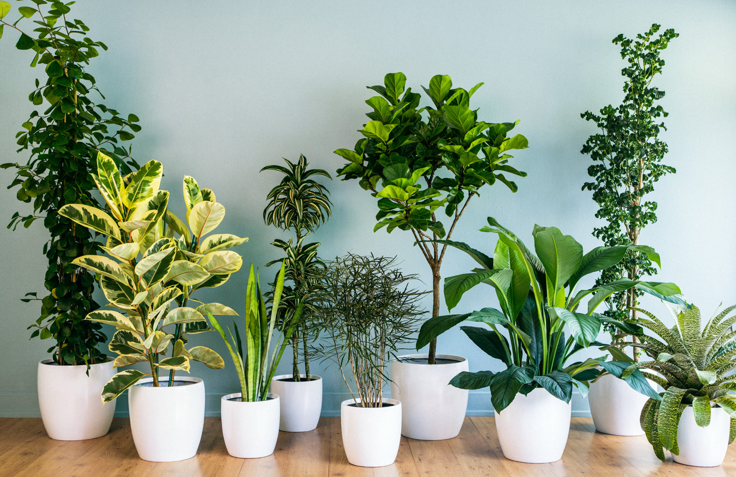 How to Water Indoor Plants forecast