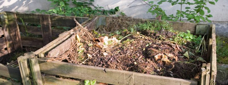 How You Can Compost in Your Backyard