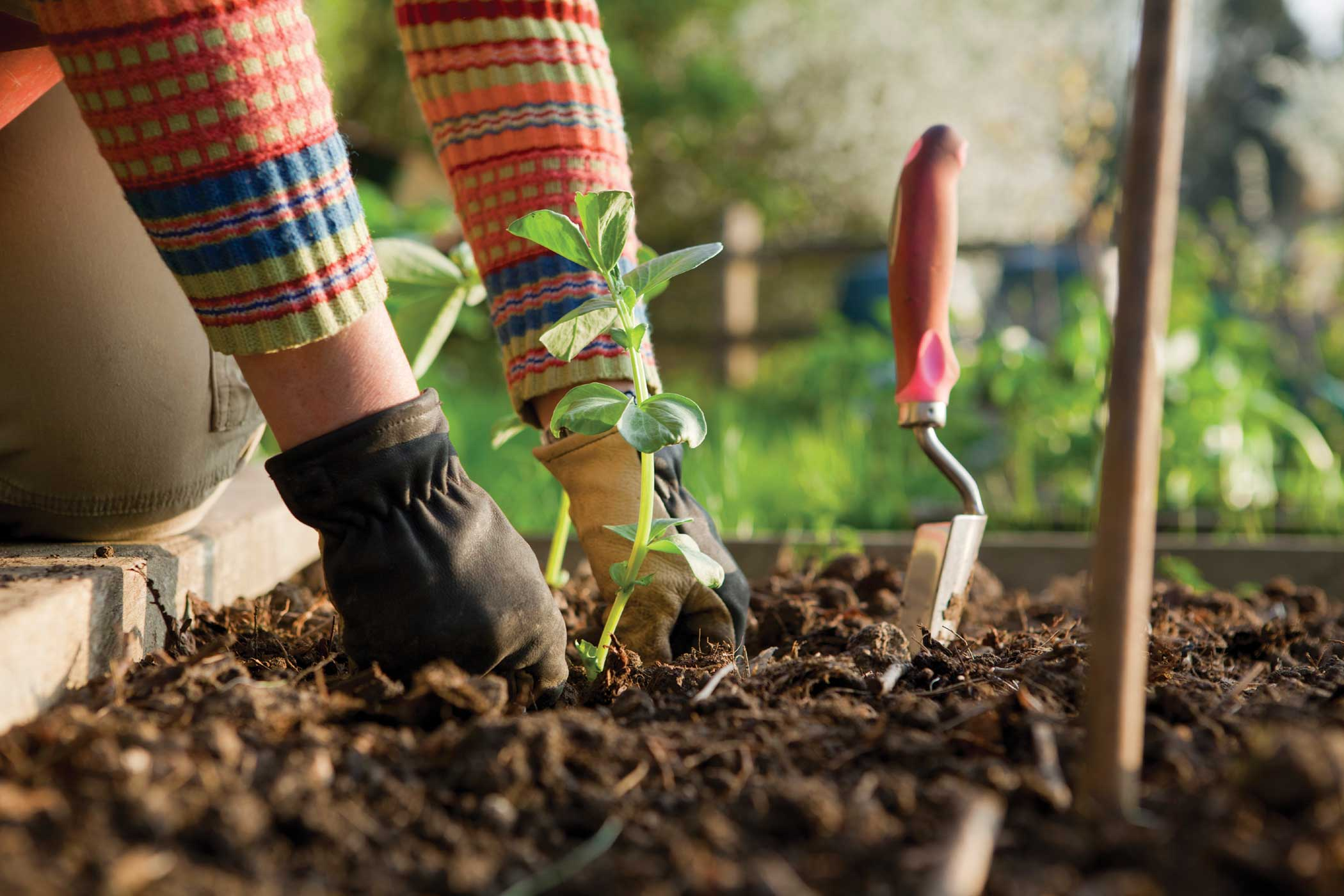 What is Gardening Therapy and why we should start doing it?