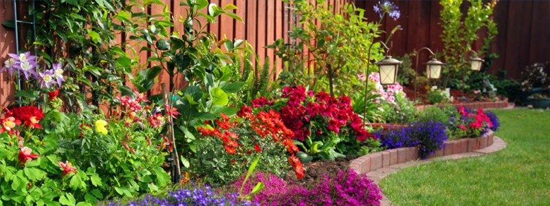 Tips for a successful flower garden