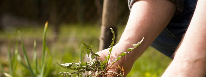 Natural homemade weed killers that work